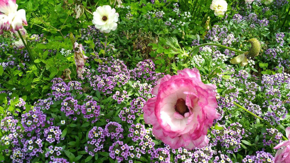 なばなの里のお花の写真