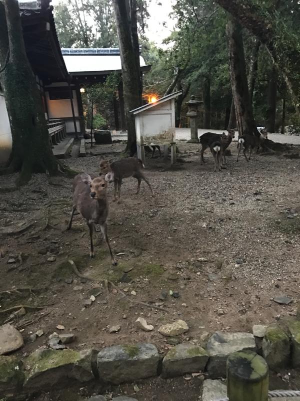 f:id:okunomasaaki:20170102213301j:image