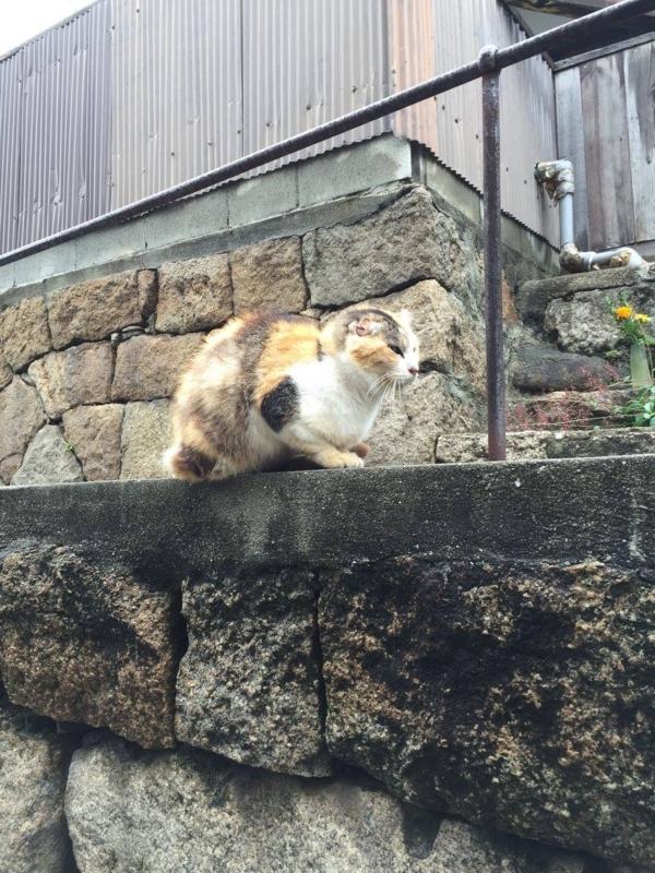 f:id:okunomasaaki:20170128212047j:image