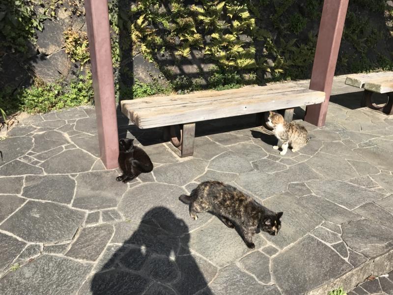 f:id:okunomasaaki:20170223220042j:image