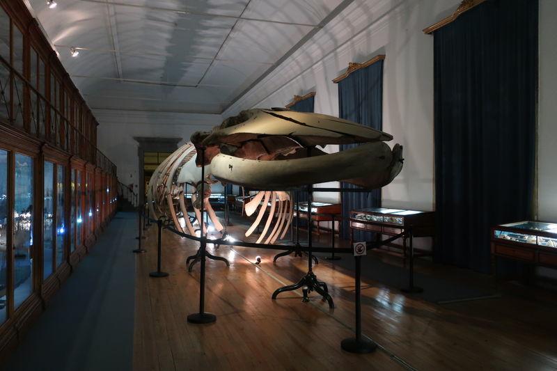 コインブラ物理学博物館内