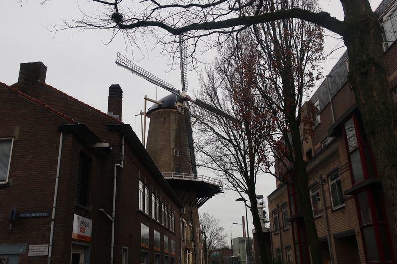 ゴーダの風車