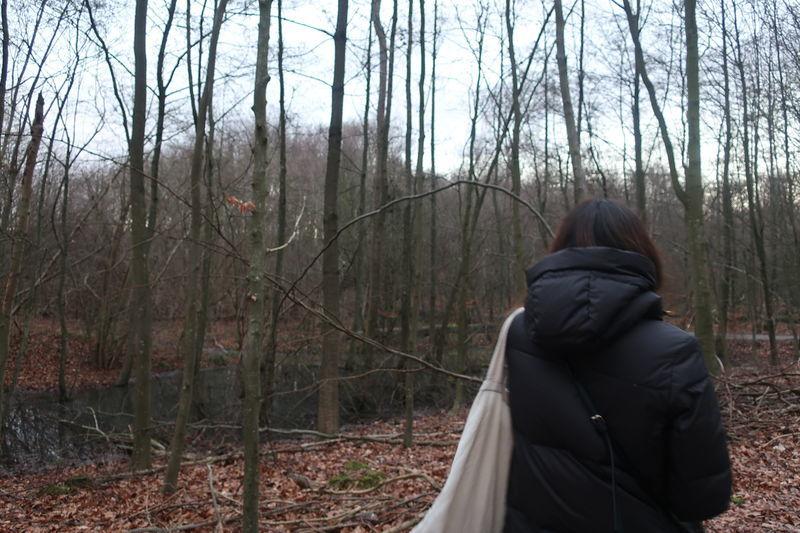 デンマークの森
