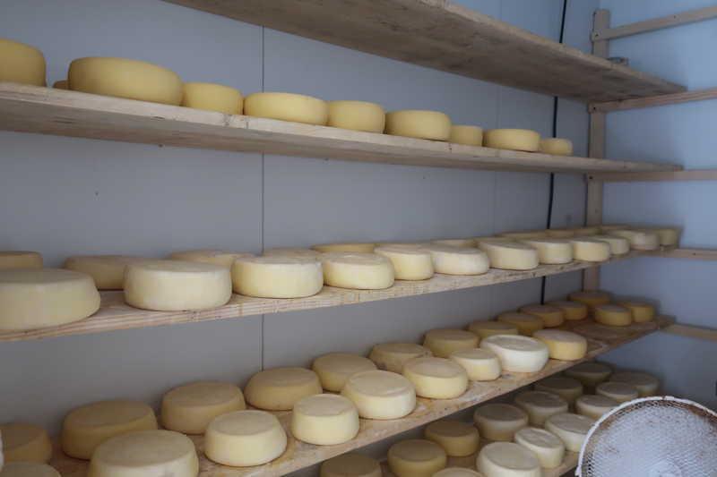 チーズ熟成庫