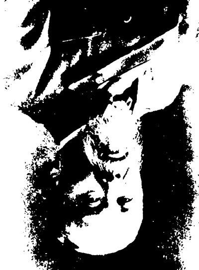 逆さまの肖像
