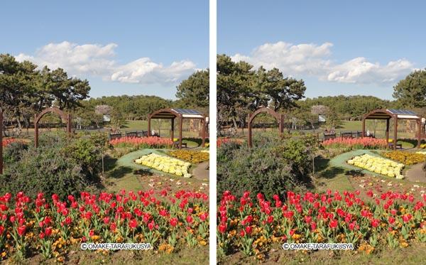 公園の風景をステレオグラム化
