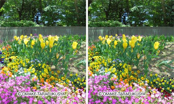 花壇を立体視