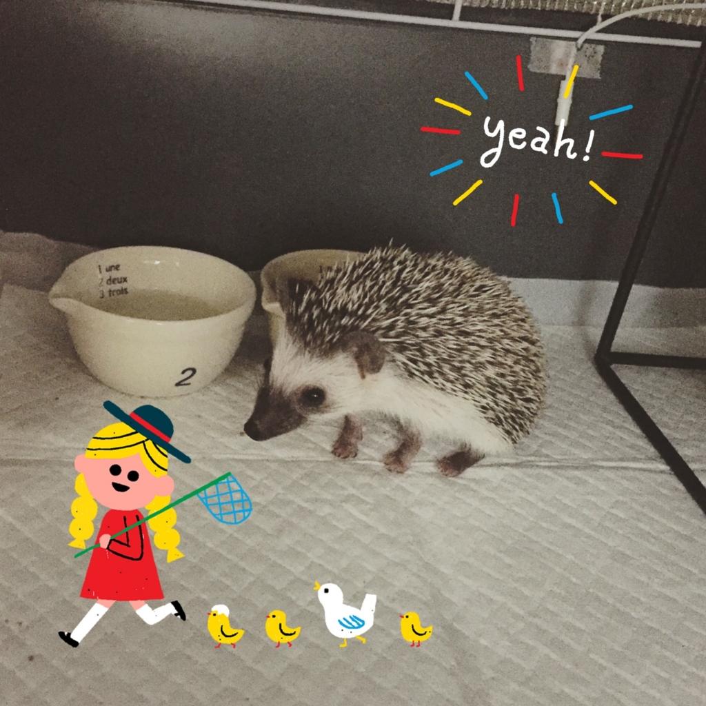 f:id:omochi_mochimochi:20170211123000j:plain