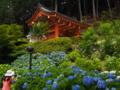 京都新聞写真コンテスト 思い出ショット