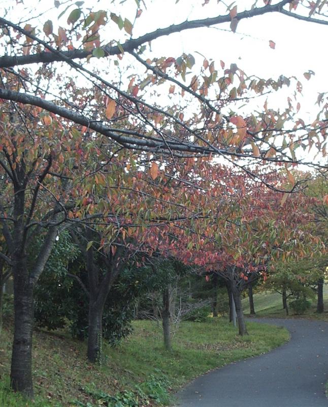 f:id:omronaruku88:20121104180633j:image:w640