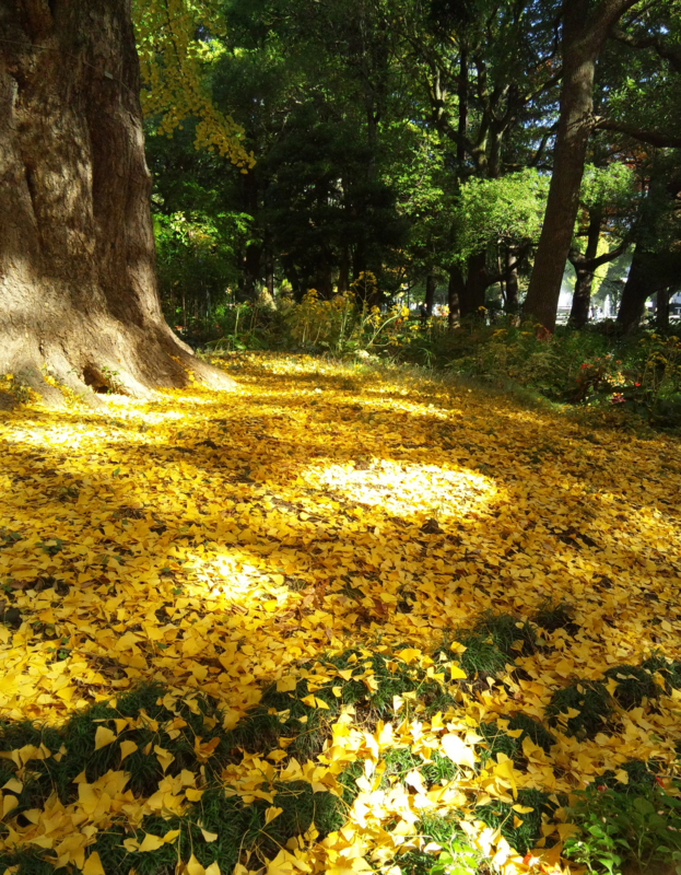 f:id:omronaruku88:20121121225127j:image:w640