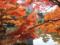 日比谷公園の紅葉と鶴の噴水 '12.12.05byダー&メイ