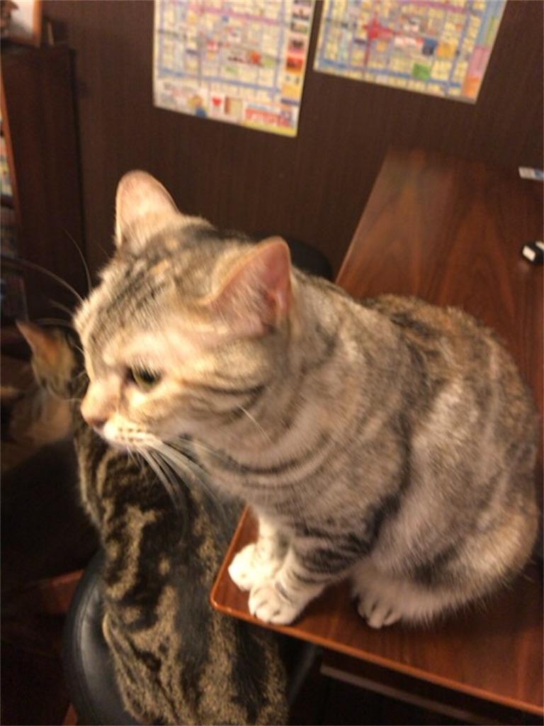 f:id:omuyakisoba:20170515185925j:image