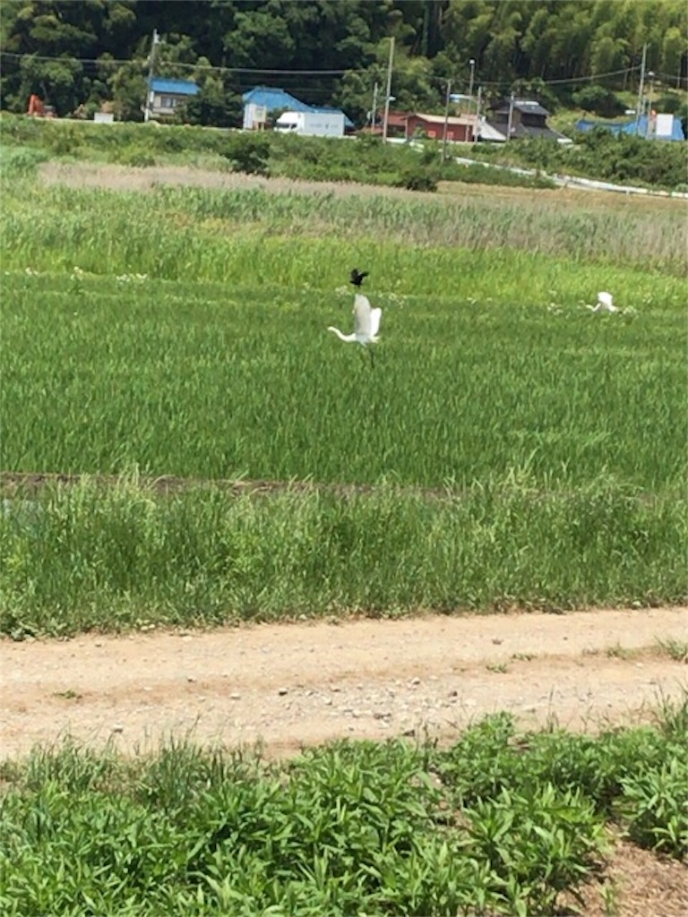 f:id:omuyakisoba:20170605193244j:image