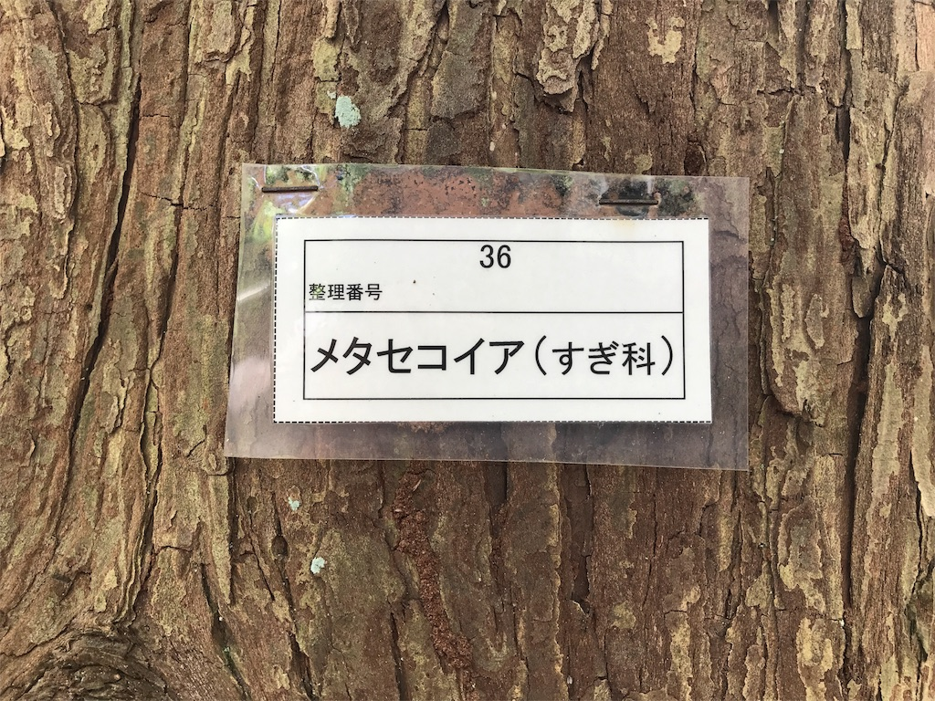 f:id:onchan19:20170921194928j:image