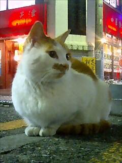 [猫][夜]