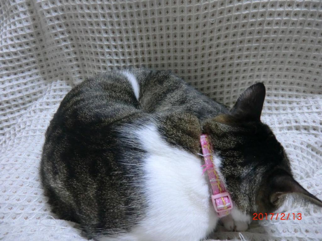 f:id:onekosama:20170213202521j:plain