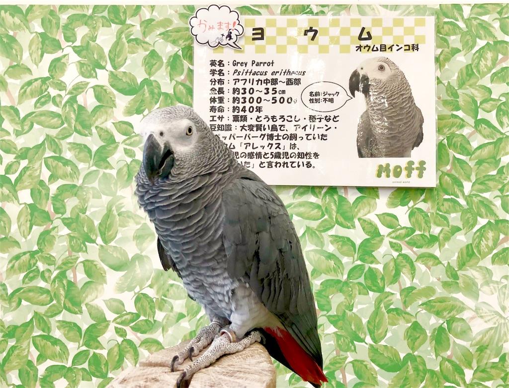 f:id:oni-gawara:20190522104140j:plain