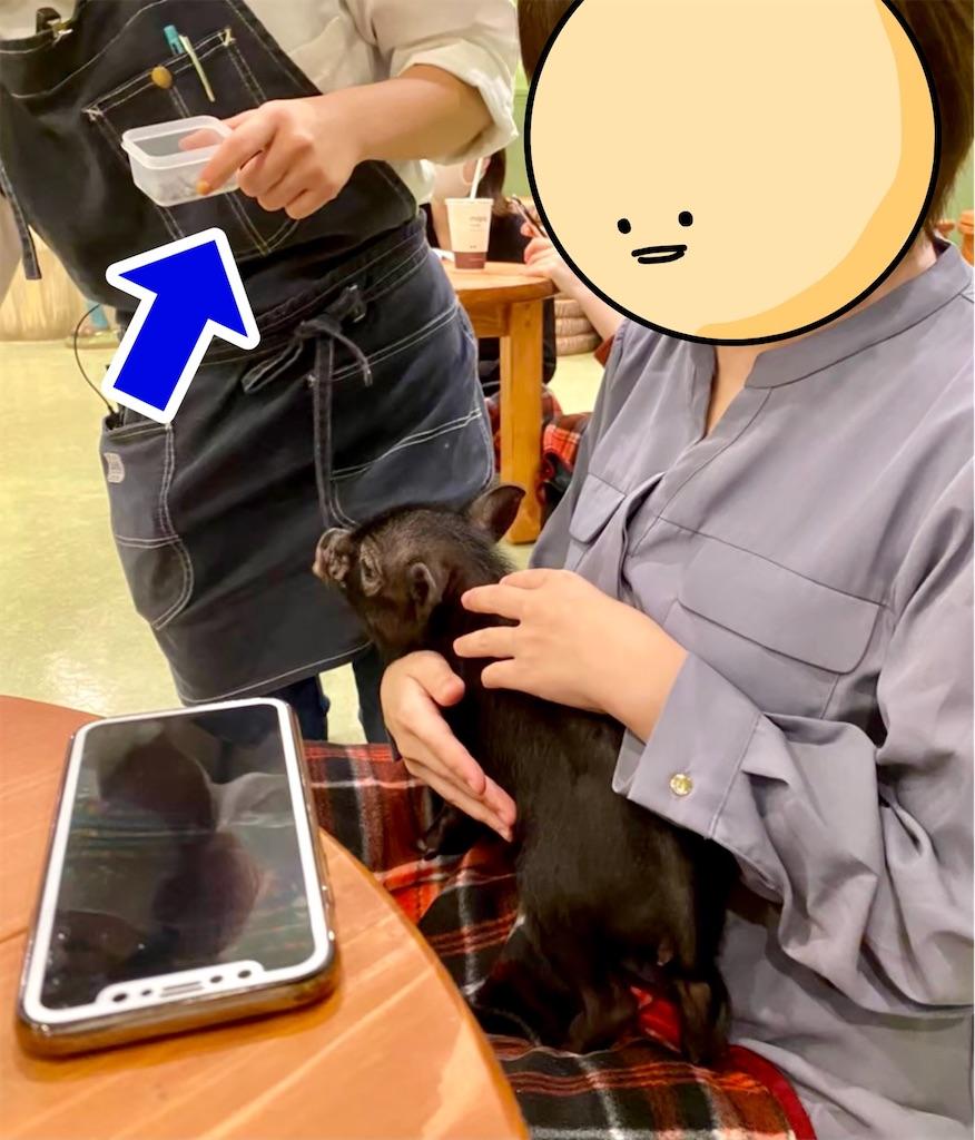 f:id:oni-gawara:20210202115902j:plain