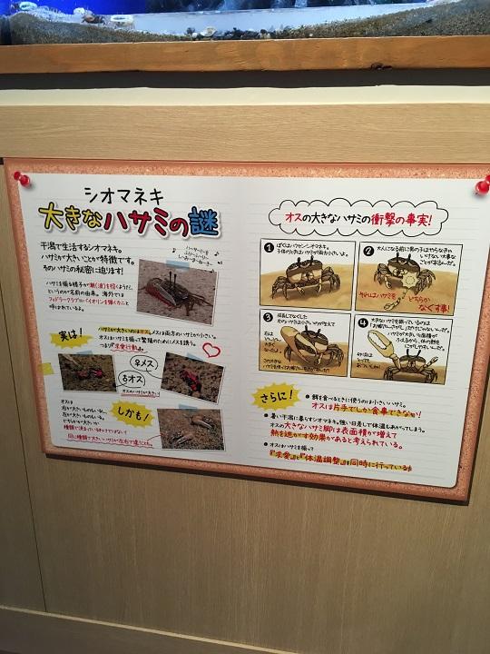 f:id:onikichikiFPN:20170901212035j:plain