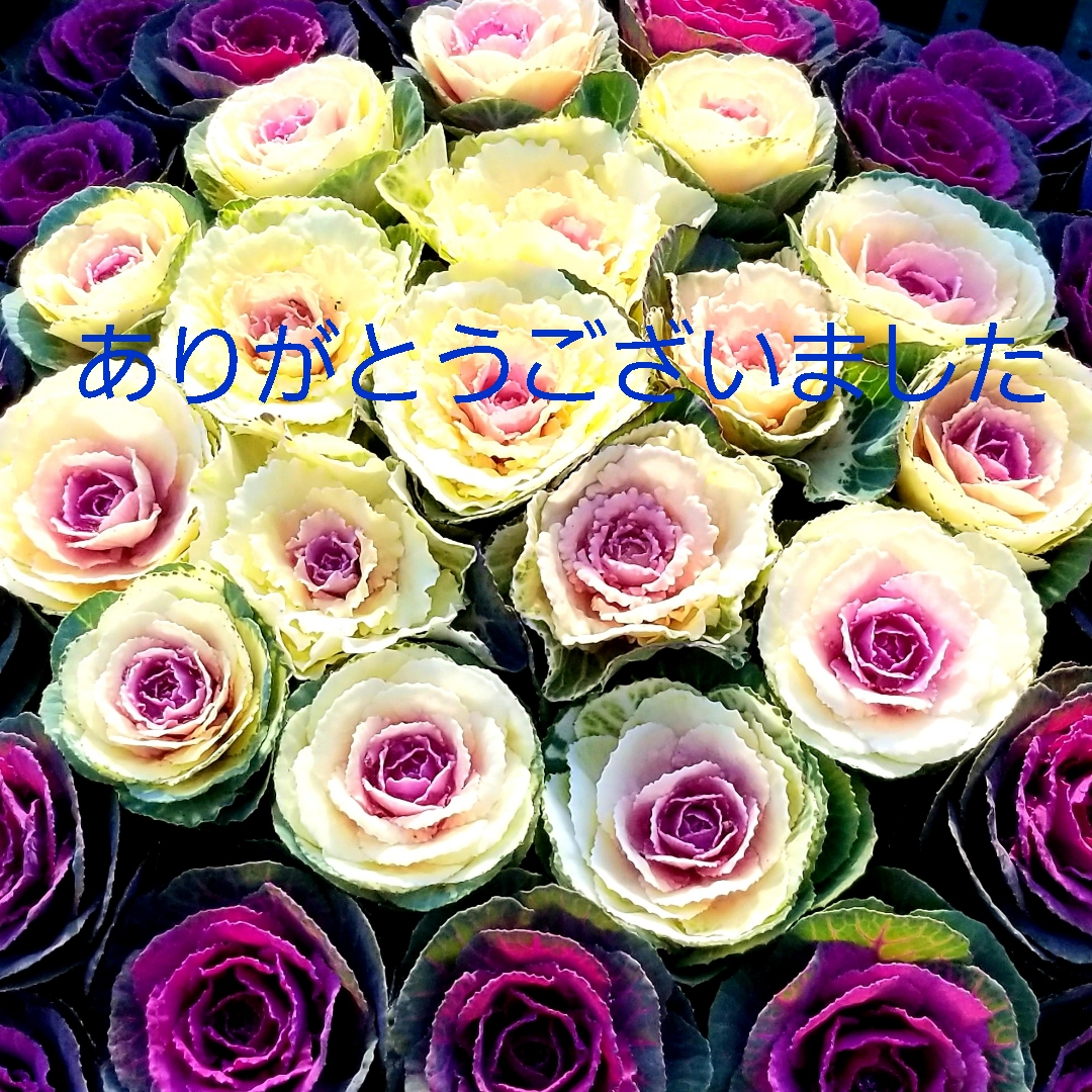 f:id:oniyome-okan:20191231174630j:plain