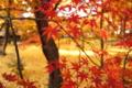『京都新聞写真コンテスト 秋のいろどり』