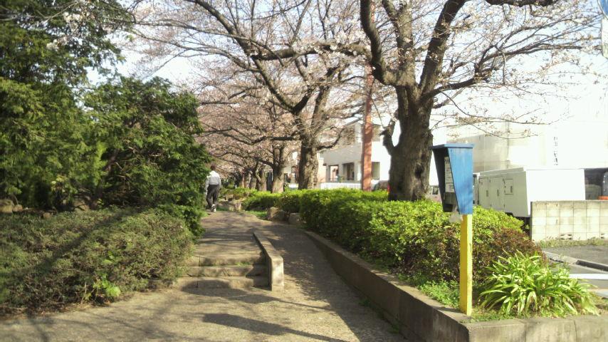 2014年3月29日通勤途中の桜並木03