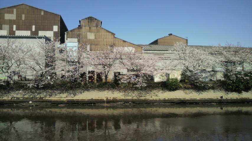 2014年3月31日仕事場からの桜の木2