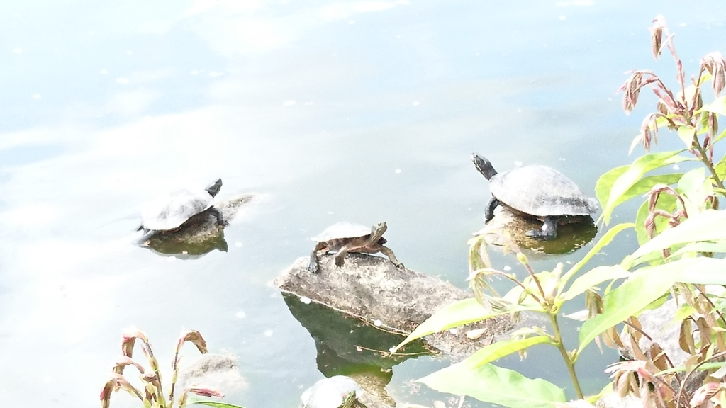 f:id:onoharayoshikazu:20170412131736j:plain