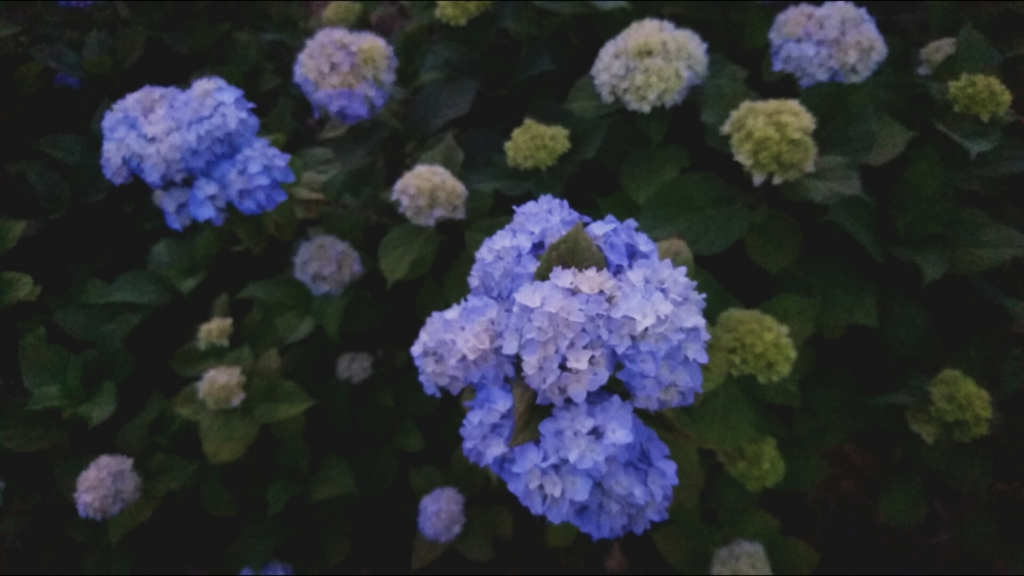 f:id:onoharayoshikazu:20170527192003j:plain