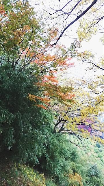 f:id:onoharayoshikazu:20171129145934j:plain