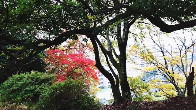 f:id:onoharayoshikazu:20171129150418j:plain