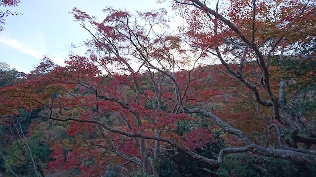 f:id:onoharayoshikazu:20181123140509j:plain