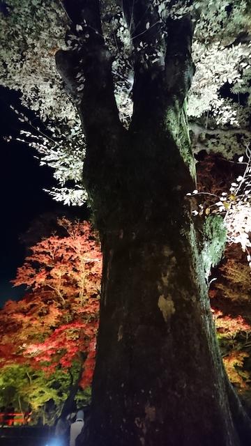 f:id:onoharayoshikazu:20181123184536j:plain