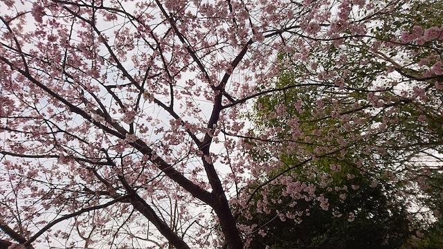 f:id:onoharayoshikazu:20190320161448j:plain