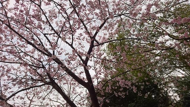 f:id:onoharayoshikazu:20190320161511j:plain