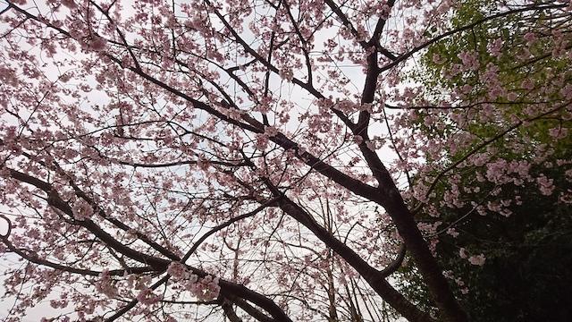 f:id:onoharayoshikazu:20190320161652j:plain