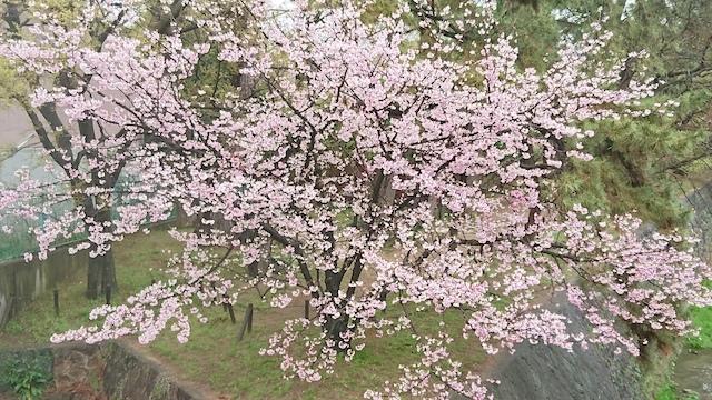 f:id:onoharayoshikazu:20190410124350j:plain