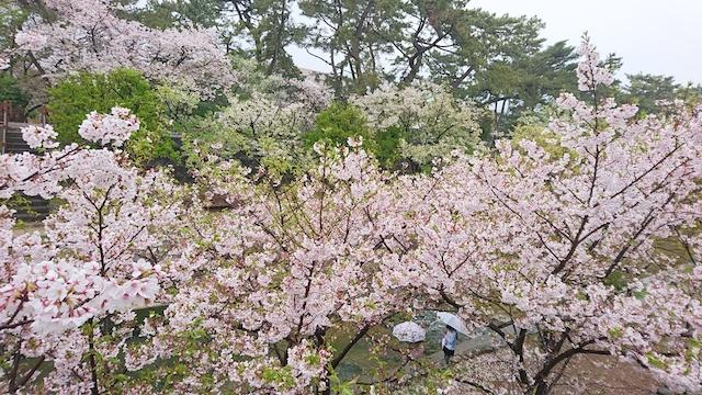 f:id:onoharayoshikazu:20190414160758j:plain