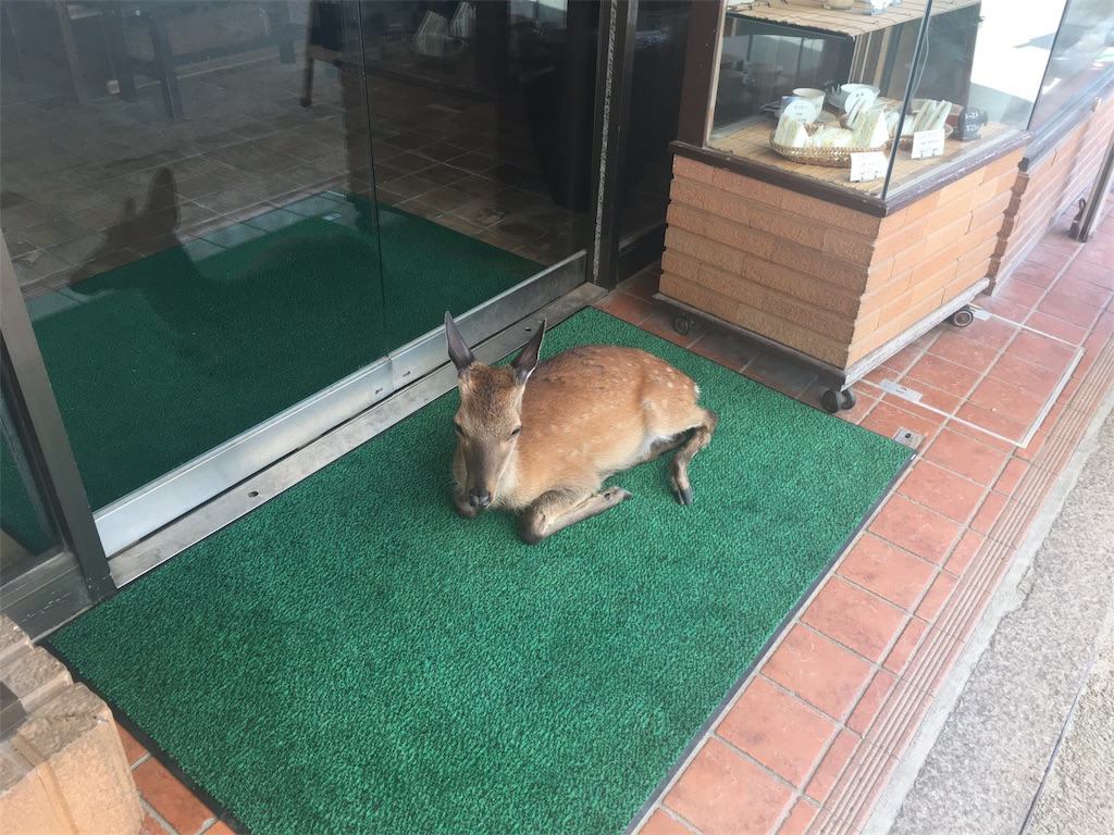 f:id:onsoku-nekopanchi:20180717231943j:image