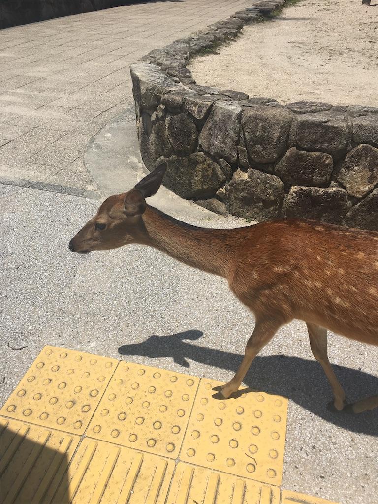 f:id:onsoku-nekopanchi:20180717232121j:image