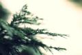 [20100114][植物]