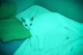 [20110708][猫]