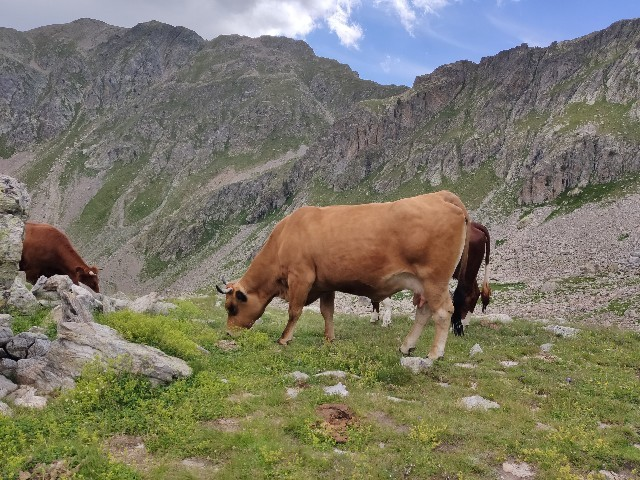 south france alpes vache randonnee