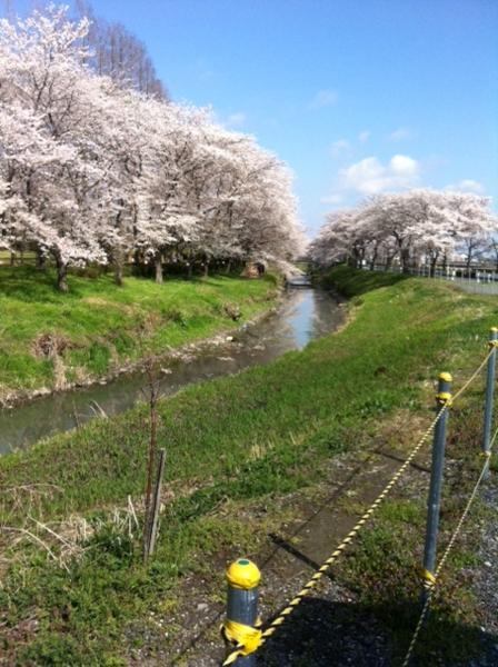 f:id:ookawaseikei:20140406091722j:image