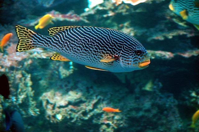 水の中を泳ぐ熱帯魚