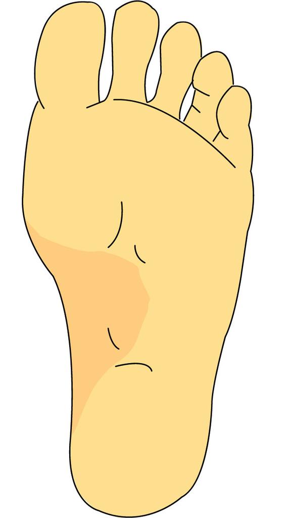 脚のアーチ