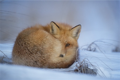 暖かい毛皮