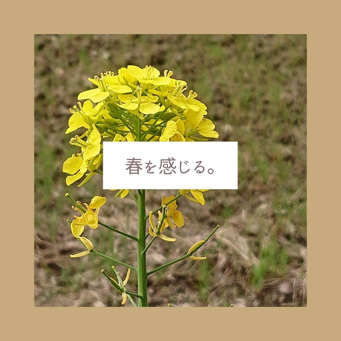 f:id:ooyuyuoo:20210406211501j:plain