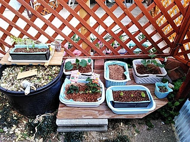 野菜作りコーナー・フェンス北側